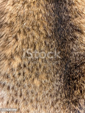 Close up of Canada lynx, Lynx canadensis, fur.