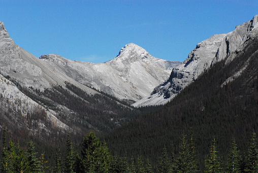 Panorama of beautiful, snow capped Canadian Rocky mountains that shows the aftermath of forest fire.  Shot in Banff, Canada.