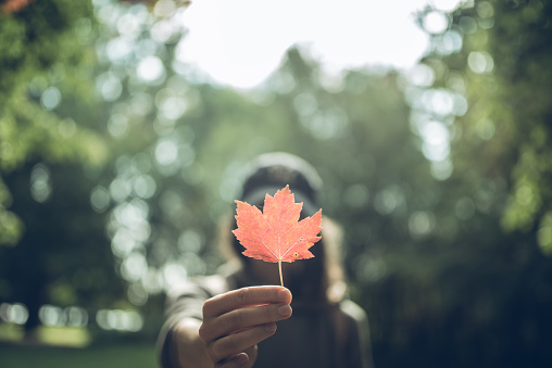 Woman Holding a Red Maple Leaf in a Canadian park