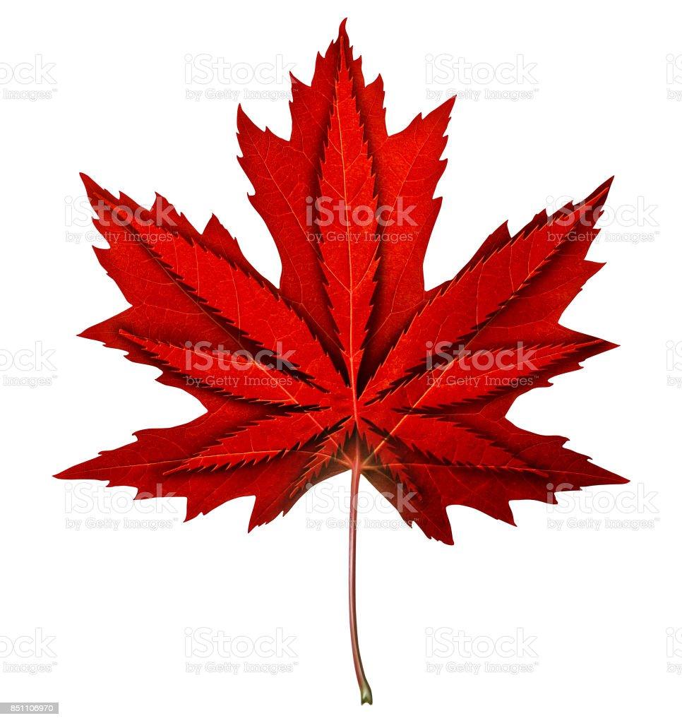 Canadian Cannabis stock photo