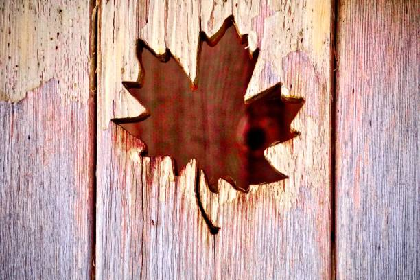 canadian day maple leaf cut out in wood - canada day stock pictures, royalty-free photos & images