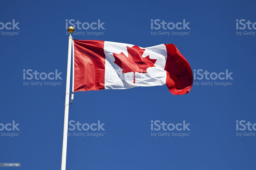 Canadian Flag in the Wind royalty-free stock photo