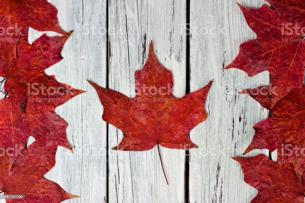 Canadian flag of red maple leaves over weathered white wood stock photo