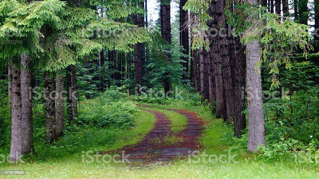Canadian green forest with trails royalty-free stock photo