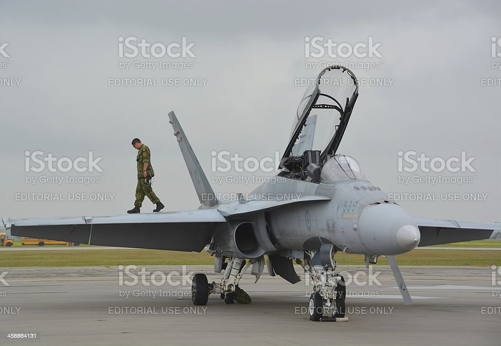 Canadian Hornet royalty-free stock photo