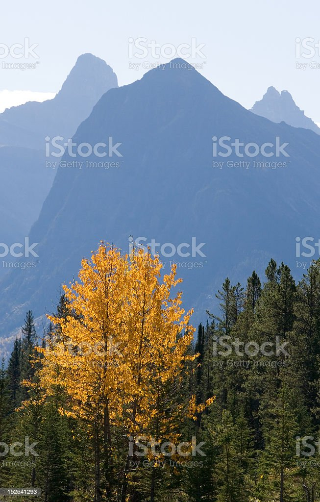 Canadian Rockies Fall Color stock photo
