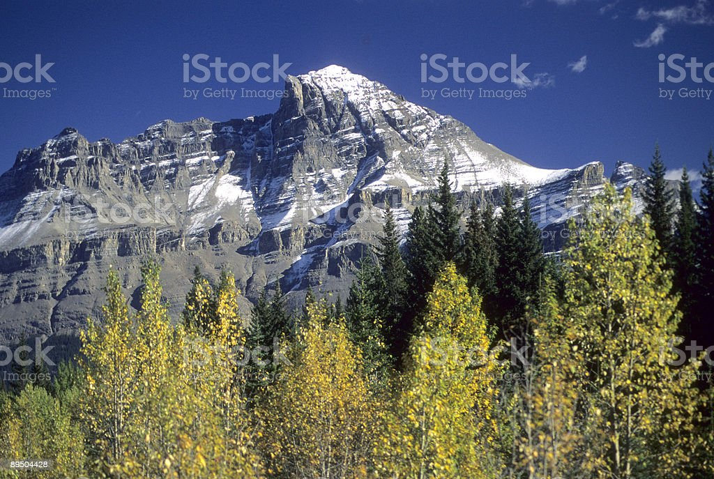Canadian Rockies, fall colors royaltyfri bildbanksbilder