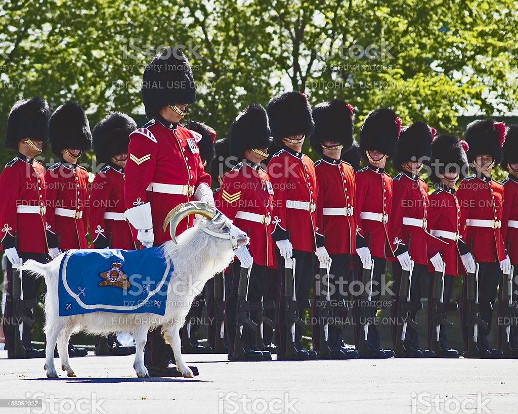 canadian royal guard stock photo more pictures of adult. Black Bedroom Furniture Sets. Home Design Ideas