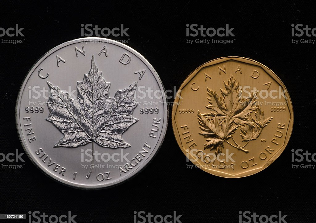 Canadian Silver Maple vs. Canada Gold Maple Leaf stock photo