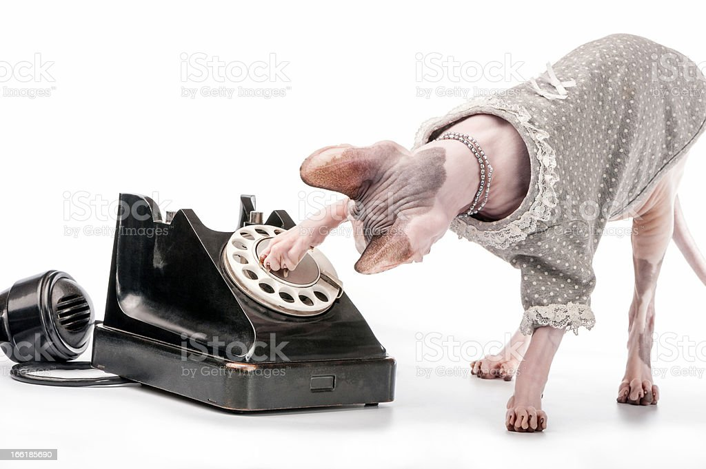 Canadian Sphynx with stylish dress,  pearl necklace and vintage  phone royalty-free stock photo