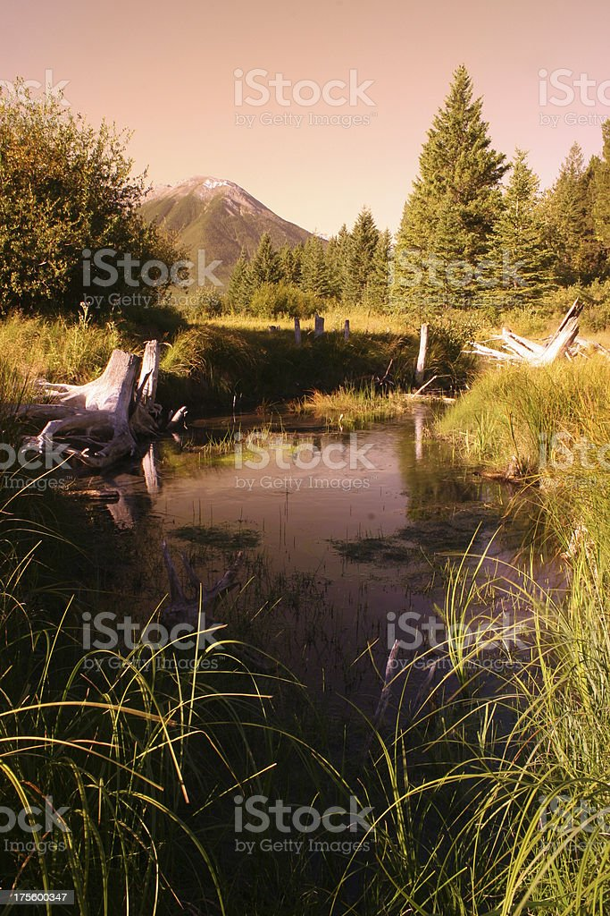 Canadian Wetlands royalty-free stock photo