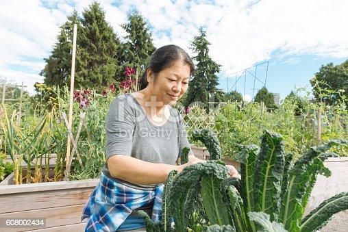 istock Canadian Woman Tends Kale Garden in Urban Farm Downtown Vancouver 608002434
