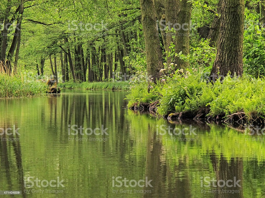 Canal at Spreewald (Germany) stock photo