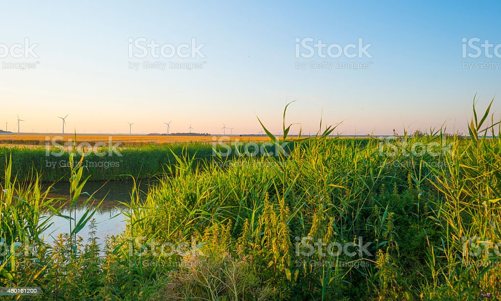 Canal through a sunny landscape in summer at sunrise stock photo