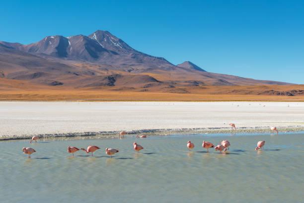 canapa 瀉湖在玻利維亞 - 阿爾蒂普拉諾山脈 個照片及圖片檔
