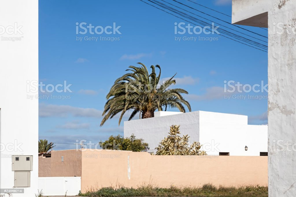 Canarian palm tree in city stock photo