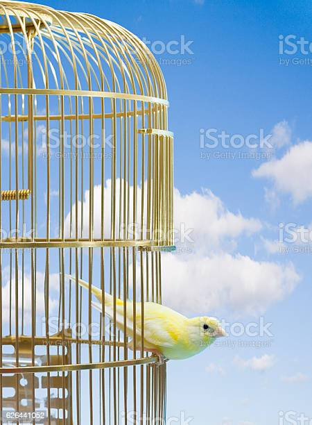 Canary bird escaping from cage picture id626441052?b=1&k=6&m=626441052&s=612x612&h=n8d9kuts8br owx33m fila4uz1uofjedbjmbo7t4jk=