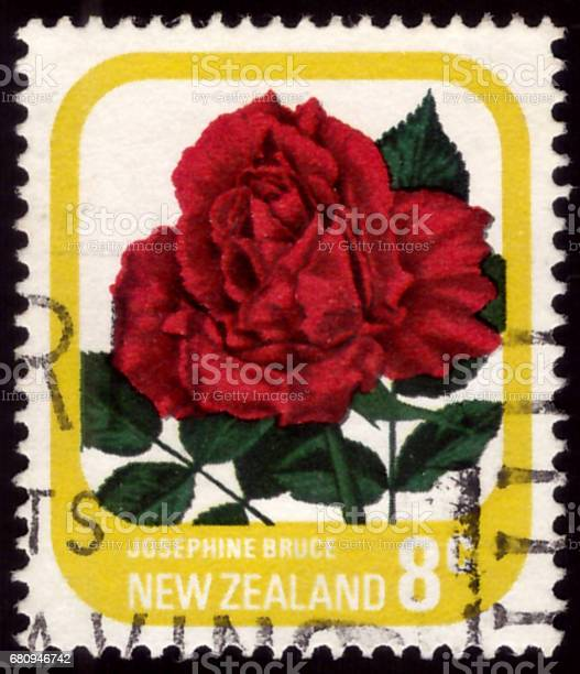 NEW ZEALAND - CIRCA 1975: A Cancelled postage stamp from New Zealand illustrating Roses, issued in 1975.