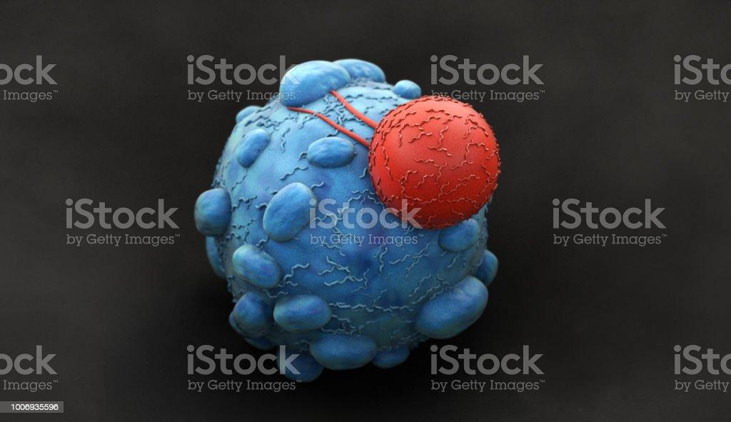 Cáncer de células atacadas por linfocitos T del asesino - foto de stock