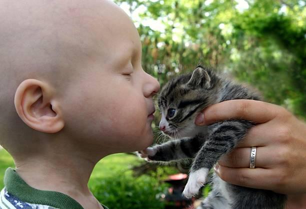 Cancer kids kisses for kitten picture id115065618?b=1&k=6&m=115065618&s=612x612&w=0&h=mxzm0wml146j3ndzcymeao1wznoj1duoccxykdouanq=