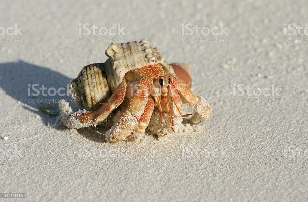 Cancer on the beach stock photo