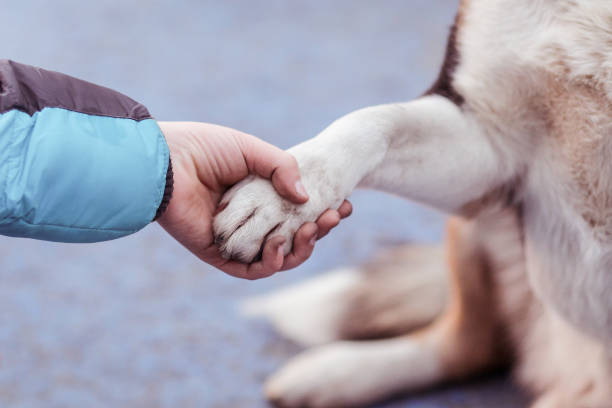 Candid moment with a young boy holding the paw of a male old dog stock photo