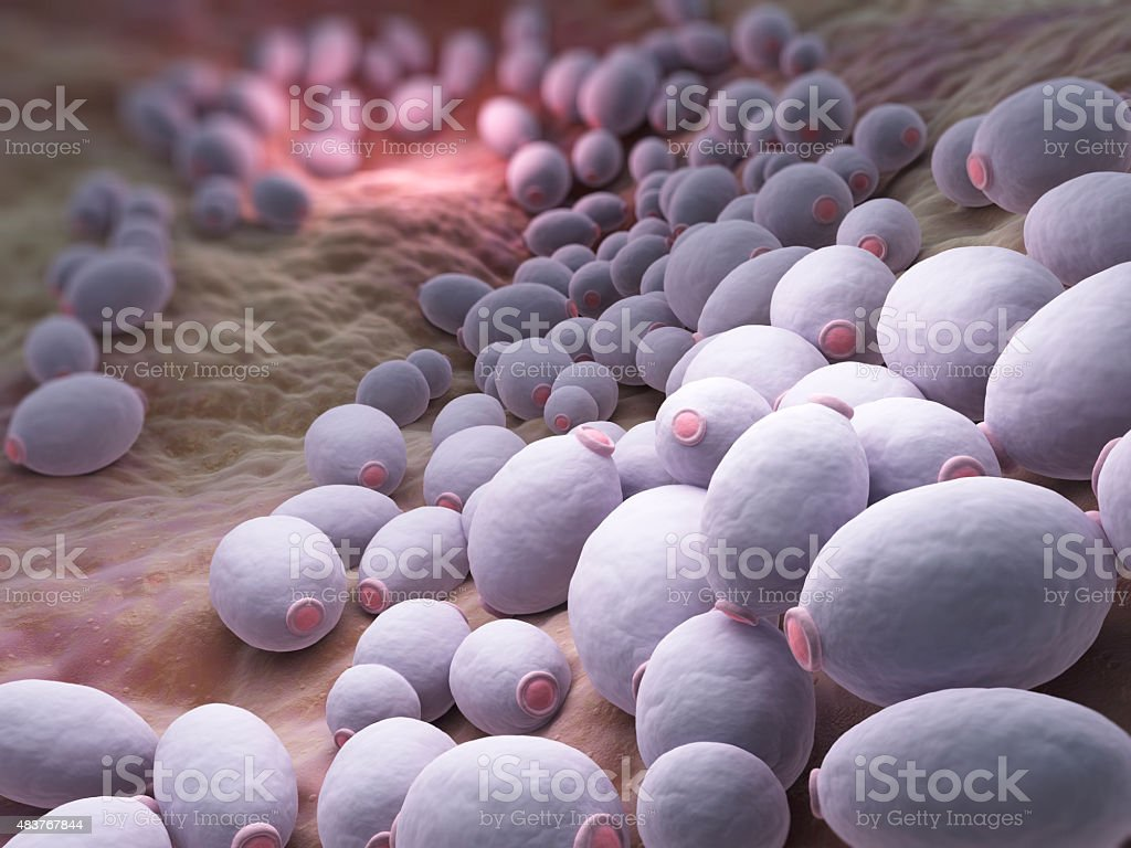 Candida albicans bacteria stock photo