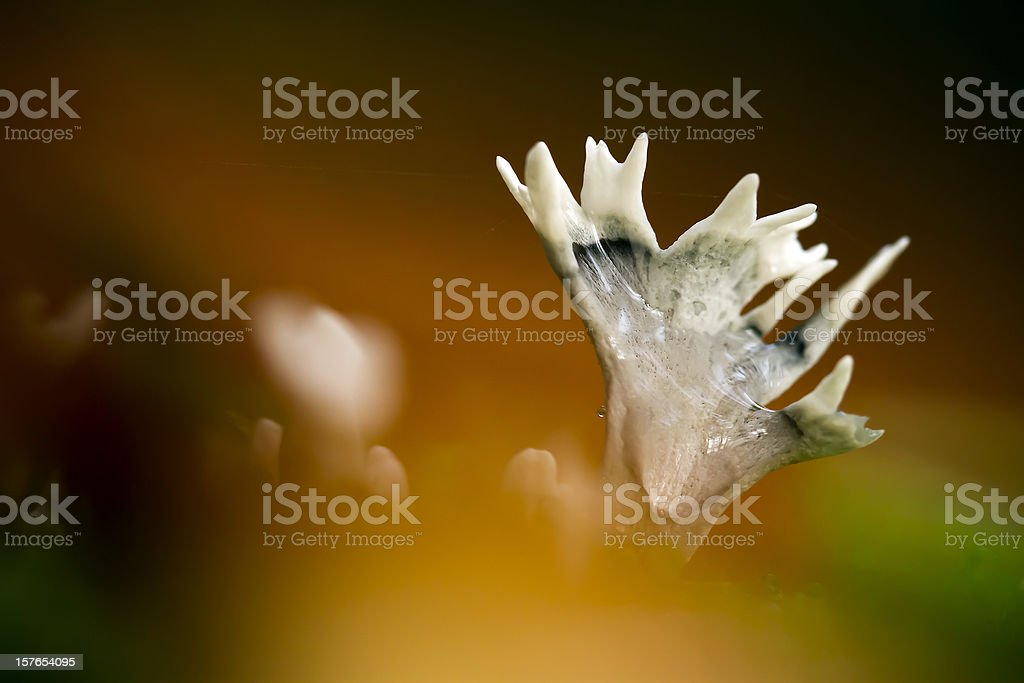 Candlestick fungus mushroom in automn atmosphere stock photo