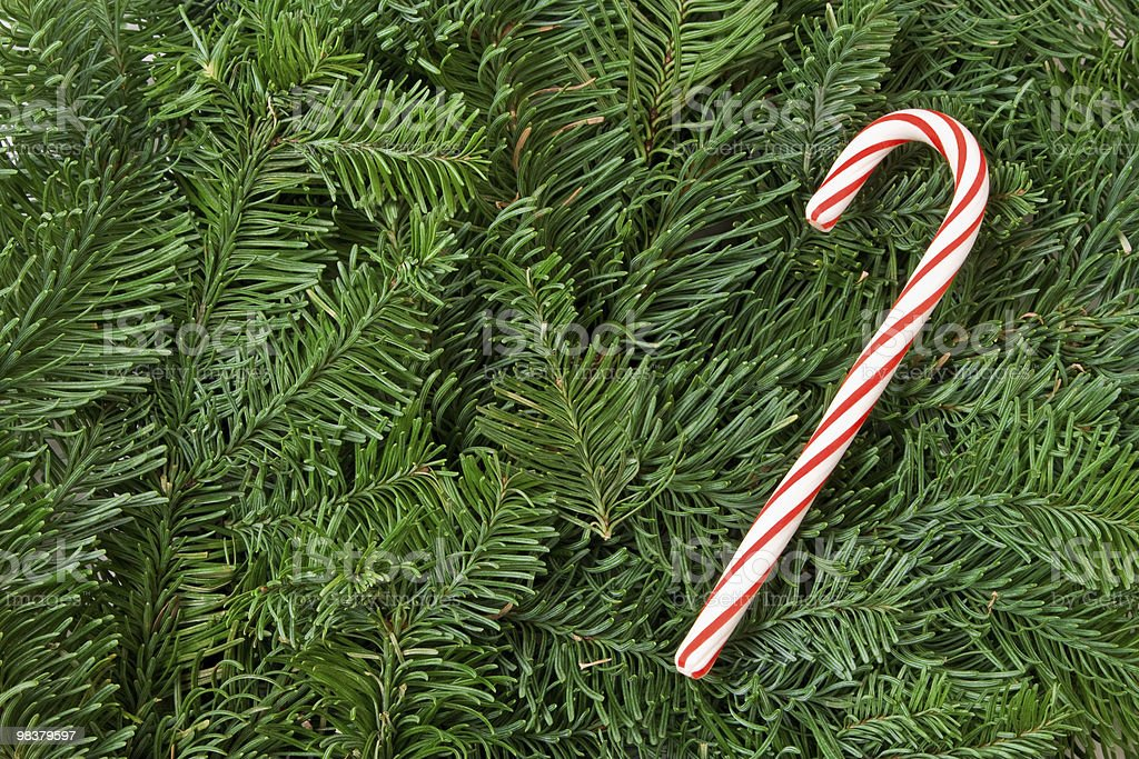 Candy cane on fir sprigs royalty-free stock photo