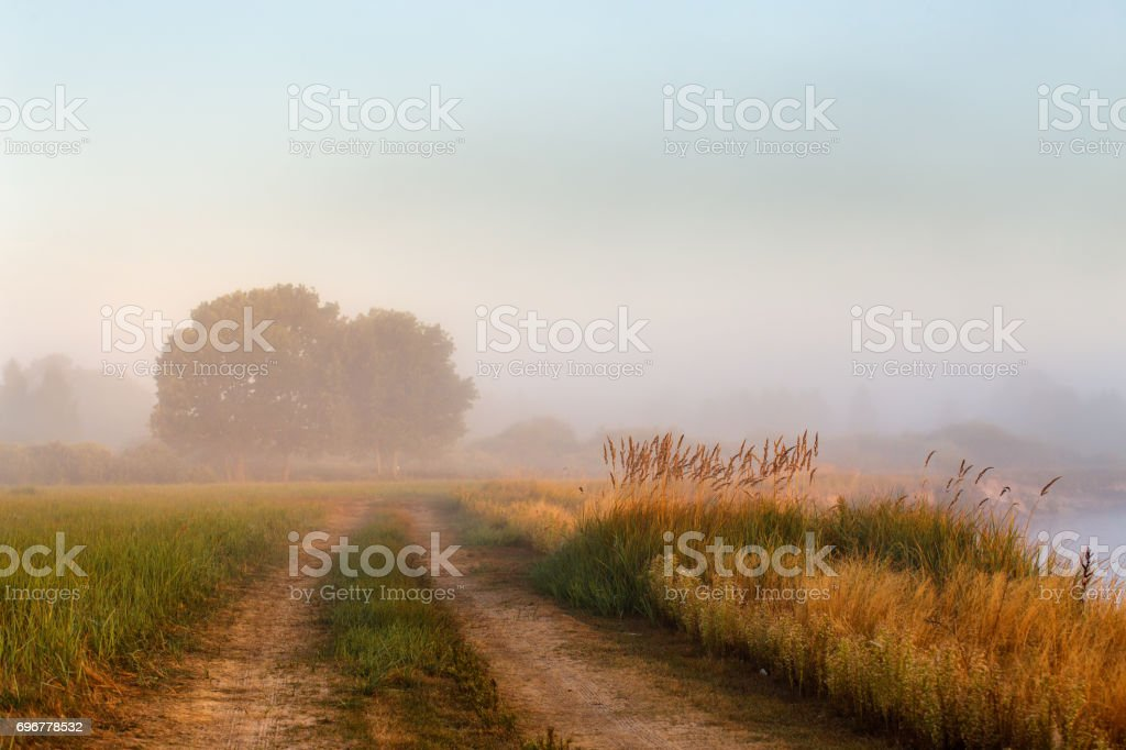 Cane bushes, oak wood, dirt country road on a misty riverbank. - foto stock