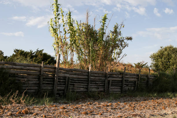 cane wall on a beach in italy - palisade boundary stock photos and pictures
