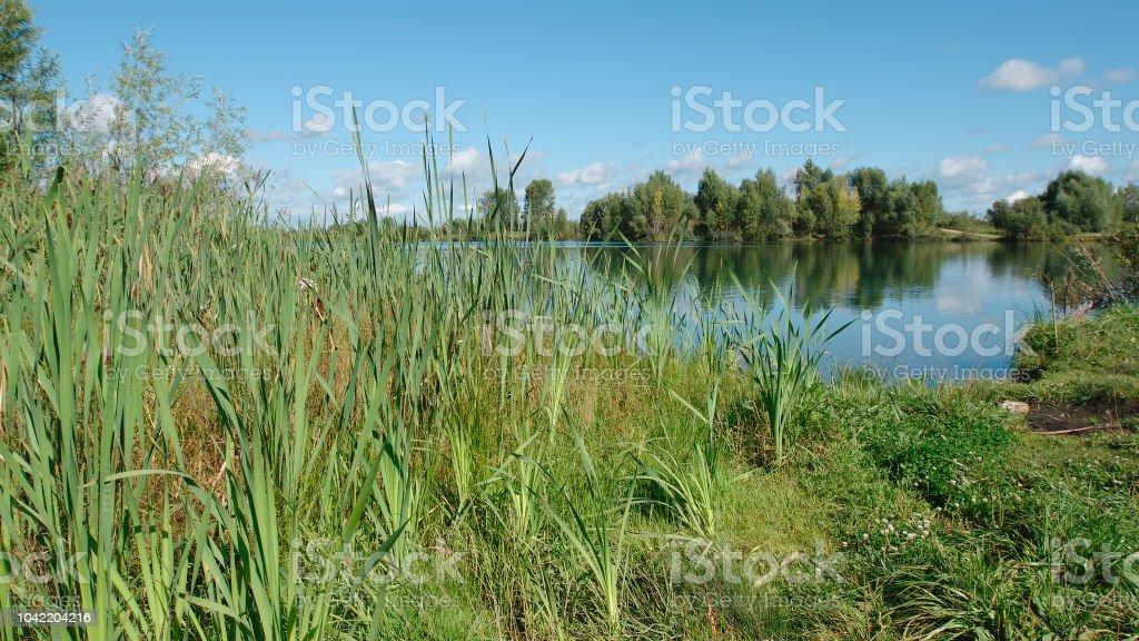 Bastones en una costa de lago en día de verano - foto de stock