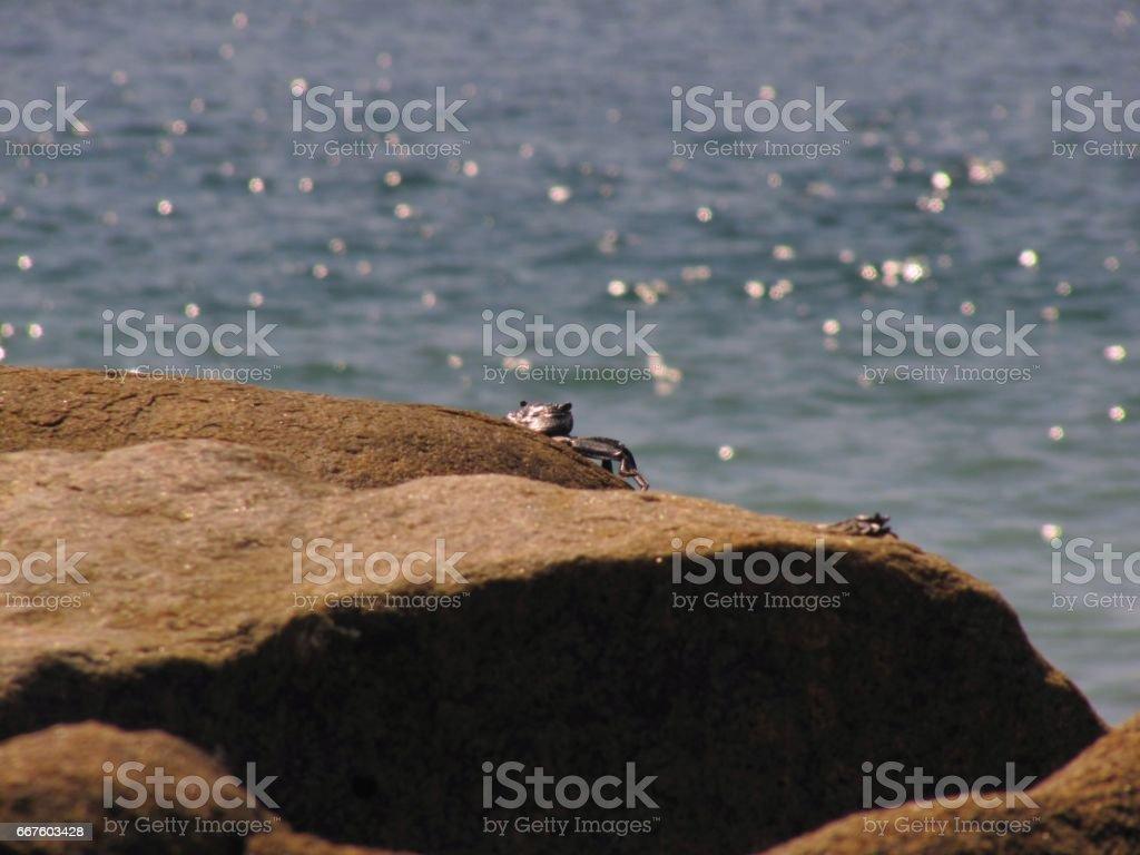 Cangrejo en la roca stock photo