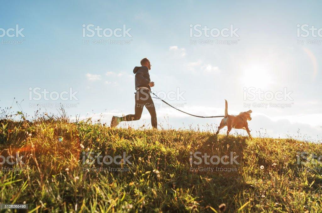 Canicross-Übungen. Mann fährt mit seinem Hund Beagle am sonnigen Morgen - Lizenzfrei Athlet Stock-Foto