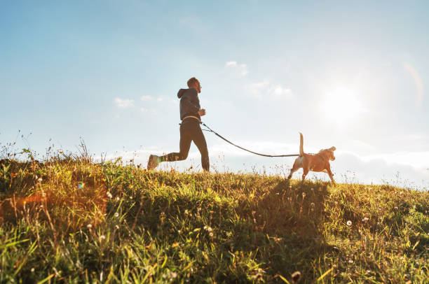 canicross exercises. man runs with his beagle dog at sunny morning - happy dog imagens e fotografias de stock