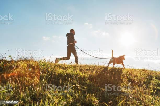Canicrossübungen Mann Fährt Mit Seinem Hund Beagle Am Sonnigen Morgen Stockfoto und mehr Bilder von Athlet