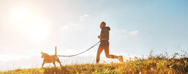 Ejercicios Canicross. El hombre corre con su perro Beagle en la mañana soleada - foto de stock