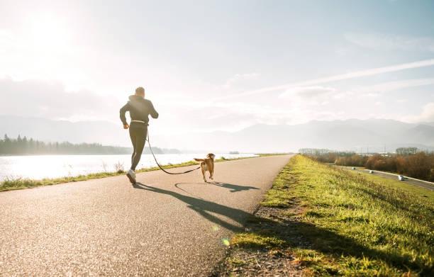 Canicross exercises outdoor sport activity man jogging with his dog picture id1068372824?b=1&k=6&m=1068372824&s=612x612&w=0&h=l0mkj jfyxozpahxocyrosiucl2kdk5xd15dzgawcma=