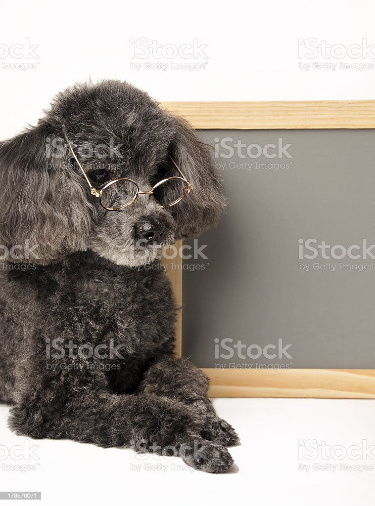 Canine Class Time royalty-free stock photo