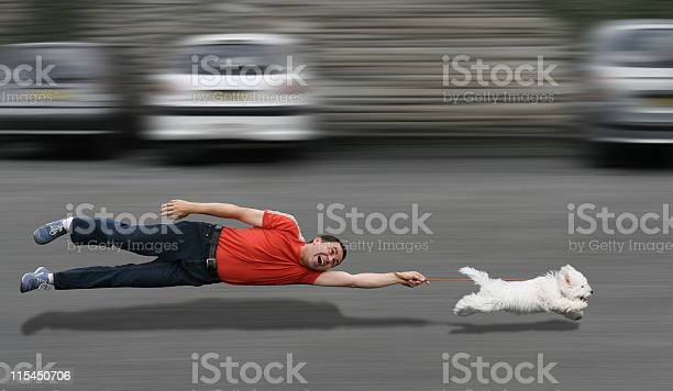 Canine education picture id115450706?b=1&k=6&m=115450706&s=612x612&h=995lqkubmncfkxua7 mhx vdvrxeiavvfirc3txssag=