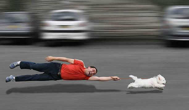 Canine education picture id115450706?b=1&k=6&m=115450706&s=612x612&w=0&h=h2phugcj 2tbtumi2edsavgi1feqkfhfnhhfmtnyo8o=