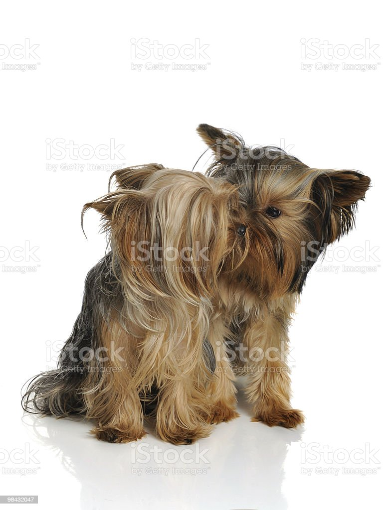 Canine love royalty-free stock photo