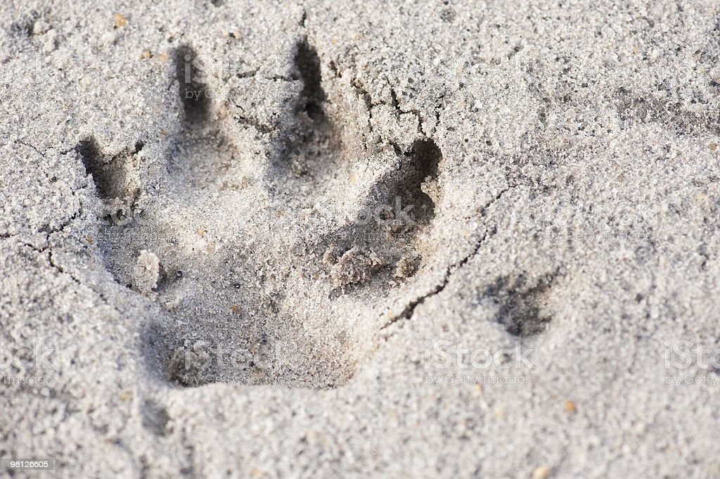 Canine Print Close Up Background royalty-free stock photo