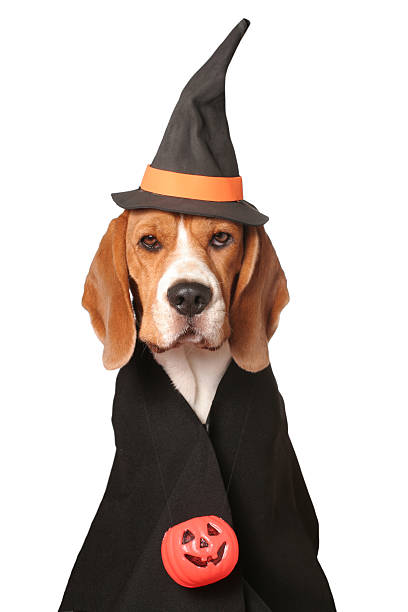 Canine Sorceress stock photo