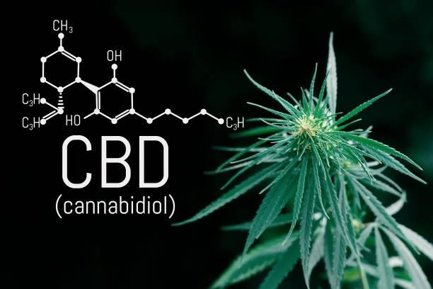 Cannabidiol (CBD) cannabis molecule. Skeletal formula. Has antipsychotic effects. Chemistry hemp stock photo