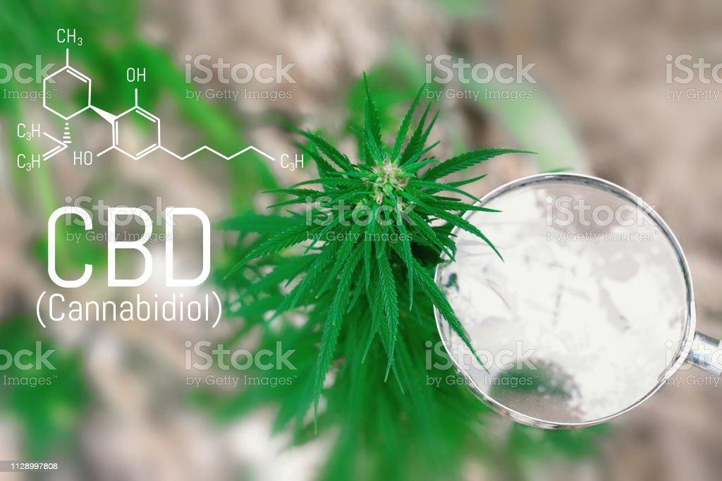 Cbd Cannabinol Cannabidiol Chemical Formula Concepts Of Grow