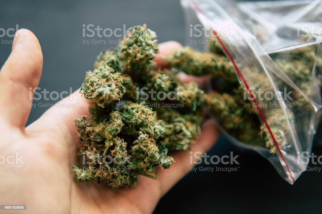 Cannabis bud i hand en drog återförsäljare väger cannabis blomma marijuana på ett fjäll conce - Royaltyfri Farm Bildbanksbilder
