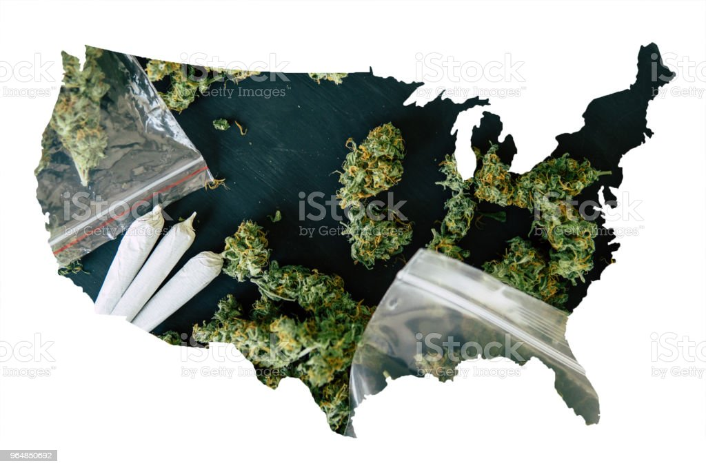 Cannabis Bud in the United State of America, Legal Marijuana in America. rolled joint with marijuana in the hands of a man against the background of fresh cones of cannabis flowers royalty-free stock photo