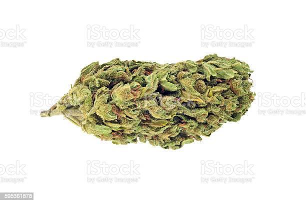 Cannabis bud isolated on white picture id595361878?b=1&k=6&m=595361878&s=612x612&h=wt9xuh2ldrbsxlpgbx0orcqki0p3qsow1ns mxldz0y=