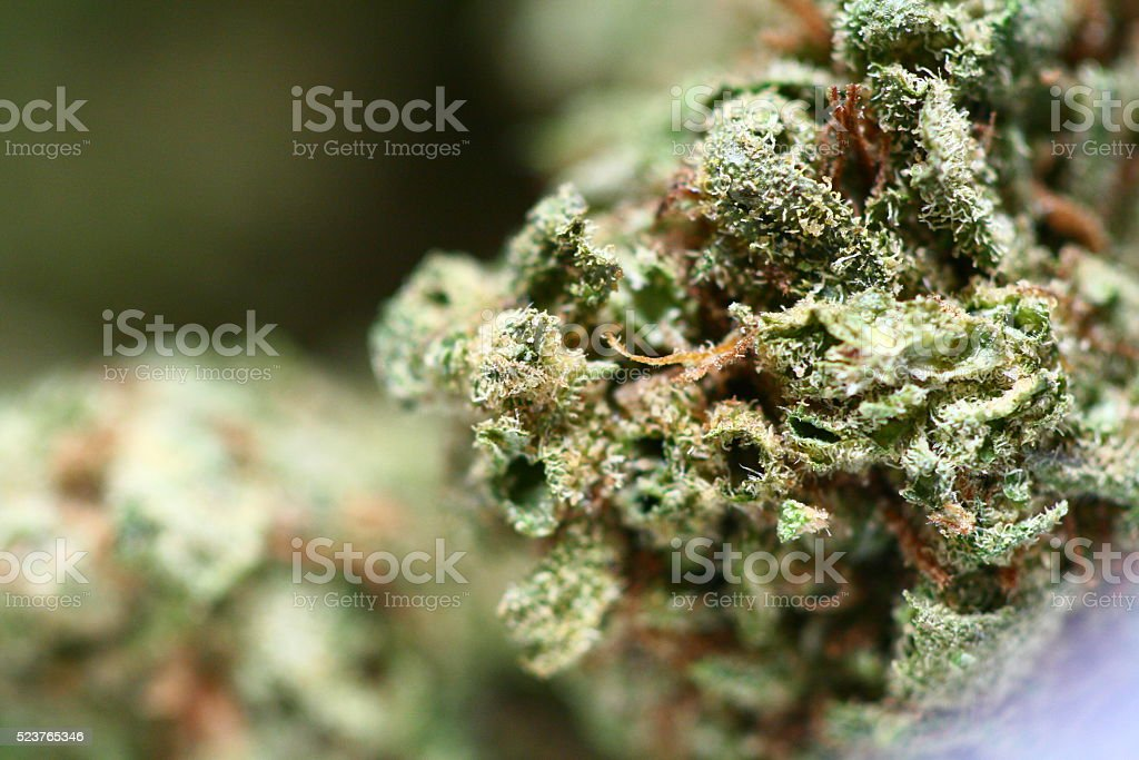 Cannabis Bud stock photo